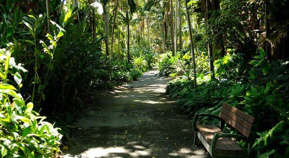 Foster botanical garden honolulu hawaii things to do for Foster botanical garden honolulu