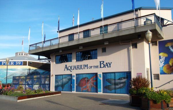 Aquarium Of The Bay San Francisco Ca Things To Do