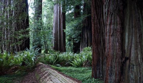 California_redwood_national_park_thingstodo-1