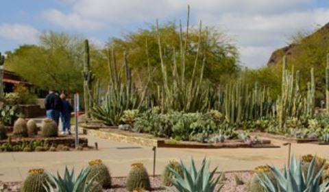 Desert Botanical Garden Phoenix AZ. Desert Botannical Garden Phoenix 1 1 ...
